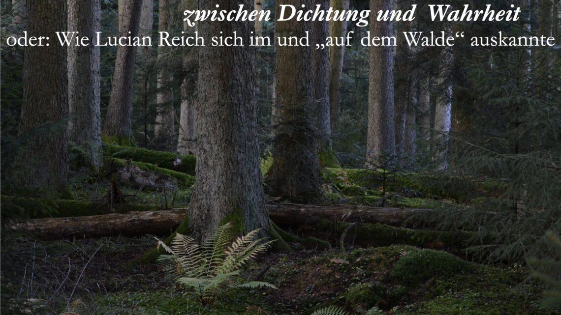 Hieronymus und der Wald-2